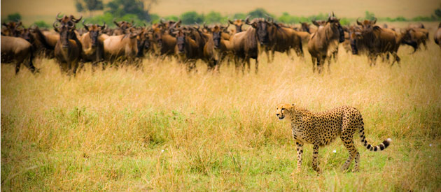 Top attractions to visit in Kenya