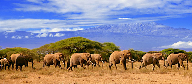 African Travel Tips When Visiting Kenya