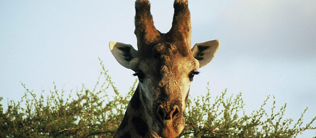 Kenya, an exhilerating safari holiday experience