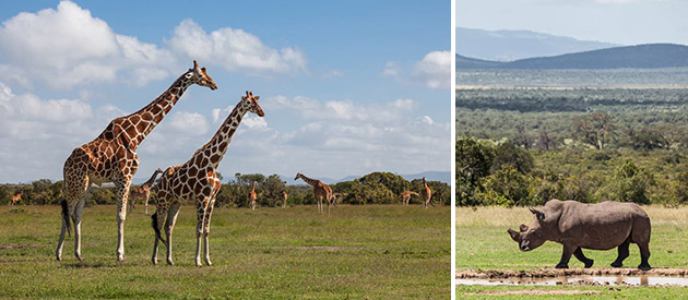Gamewatchers Safaris - Porini Camps - Kenya accommodation