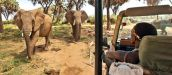GAMEWATCHERS SAFARIS & PORINI CAMPS